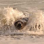 Surfin' Helgoland