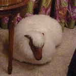 Cute Sheep!