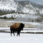 Old Faithful Snowmobile Tours - Day Tours