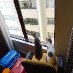 Os Gatitos adoraram a vista !