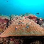 Kosrae Reef