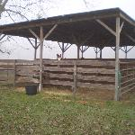 2 outside stalls areas / panels in other chicken houses