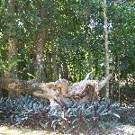 Épiphytes, végétal qui vit sur une plante
