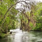 Silver Springs River Photo