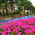 Remarkable bougainvillea gardens, all over the property.