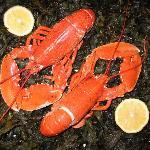 Fresh Local Lobsterl