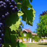 Photo de L'Autre Vie: A blend of boutique hotel & B&B charm, surrounded by Bordeaux's vineyards