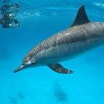 spot a dolphin