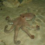 Gulf Specimen Marine Lab & Aquarium Photo