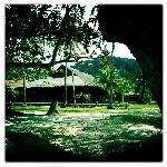 D'Coconut Resort