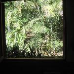 View outside the bedroom window