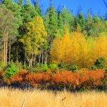 Glengarra Woods