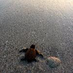 Baby turtles right out front!