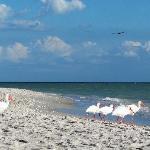 Bowman's Beach, Sanibel Island, FL