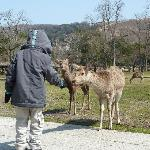 feeding deers at Nara park