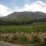 Weingut Constantia