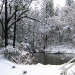 The pond in winter.