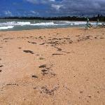 dirty beach and cheap beach chairs