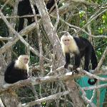 Abundance of monkeys at the far end of the beach