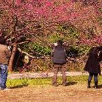 Photographers Among the Blossoms
