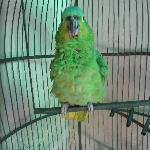 "on site parrot that says ""hola"""