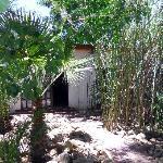 Pretty bamboo garden