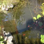 Fish pond in garden