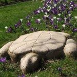 Turtle Trail Little Park