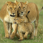 County Simba Safaris Day Tours