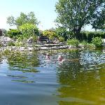 Badenixen im Schwimmteich mit Wasserfall