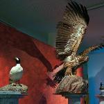 Birds of Finlad exhibition