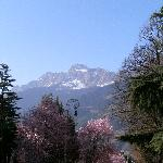 mandelblüte in meran
