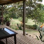 Subtropical Garden view