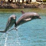 AKR Dolphin Show