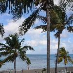 palms on beach at hotel