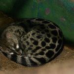 Foto de Miller Park Zoo