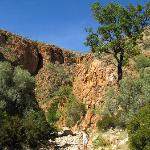 Olive trail descente