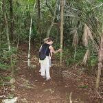 Mariposa's jungle trail