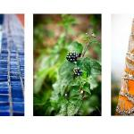 Photo selection_triptych_B&B Vista Atenas_Atenas_Costa Rica_hotels