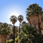 Fortynine Palms Oasis Trail