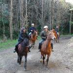 A horse trek through the pine trees