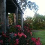 Early morning - Kamahi Cottage