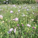 In the summer, the wildflower meadow is stunning to see.