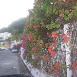 mur de bougainvilliers
