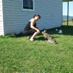 Feeding a Bunny
