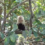 The monkey that scored the mango
