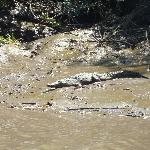 Croc on the shore
