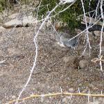Bunny along the path