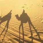 Escursioni meravigliose nel deserto!