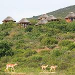 Impala in front on chalets